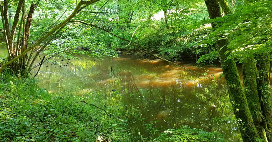 Rivière et sous bois