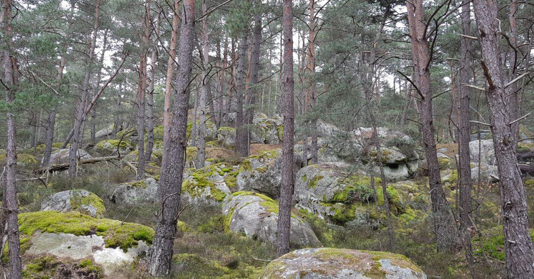 Arbres et rochers